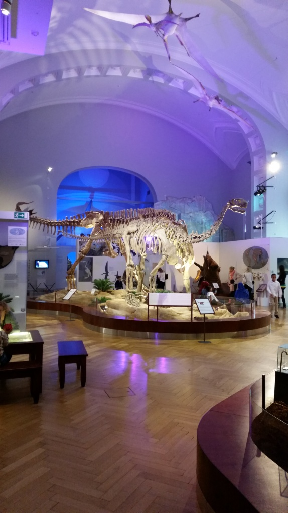Luomus_Helsinki_skeleton