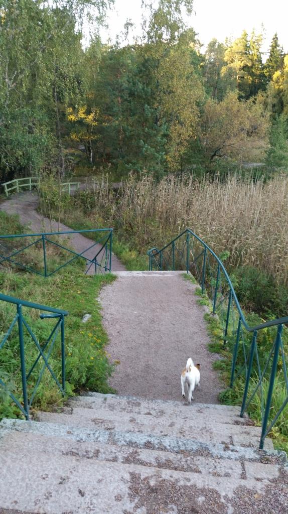 Paths and steps around Seurasaari island