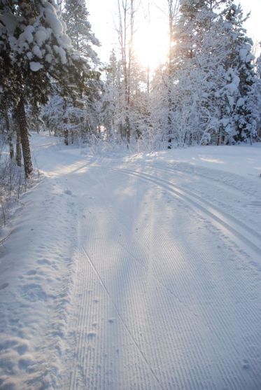 Cross country skiing in Helsinki 4
