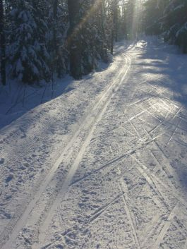 Cross country skiing in Helsinki 6