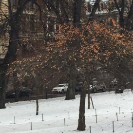 wonderland-snow