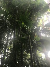 bamboo_tree_helsinki_bothanic_garden