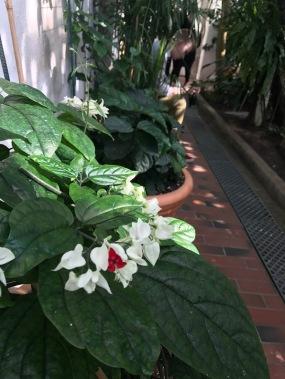 bothanic_garden_kaisaniemi